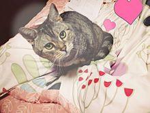 猫の日常の画像(猫の日に関連した画像)