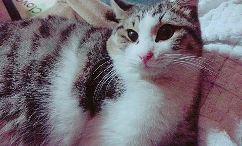 #自慢の猫の画像(プリ画像)