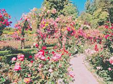 お花畑の画像(お花に関連した画像)
