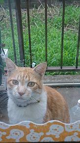 猫の画像(猫に関連した画像)