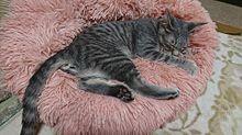 可愛い猫の画像(猫に関連した画像)