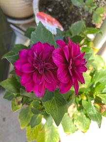 お花 プリ画像