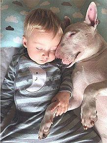 baby and dogの画像(赤ちゃん 外人に関連した画像)