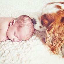 baby n dogの画像(赤ちゃん 外人に関連した画像)