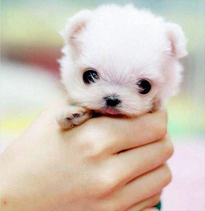 手の中のかわいい子犬