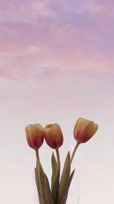 꽃 プリ画像