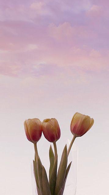 꽃の画像 プリ画像