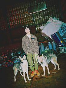 NCT127 MAD DOGの画像(DOGに関連した画像)