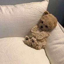 犬の画像(可愛い、かわいいに関連した画像)