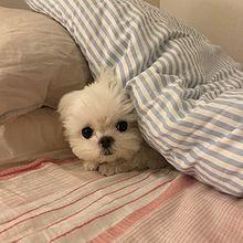 犬 プリ画像