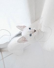 🐈の画像(猫 おしゃれに関連した画像)