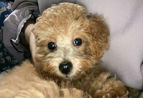 愛犬!!🐻💕はっしー        これで!!の画像(プリ画像)