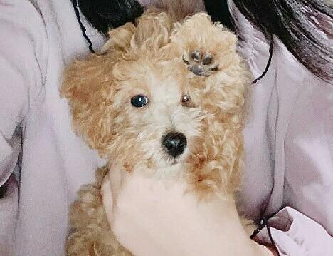 愛犬はっしー!!🐻💕         これで!!の画像(プリ画像)
