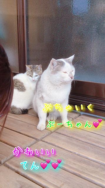 ネコฅ^•ﻌ•^ฅの画像(プリ画像)
