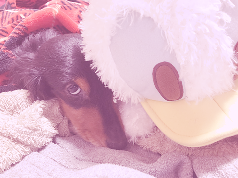 ドナルドと愛犬の画像(プリ画像)