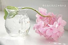 ありがとう 保存→画質upの画像(好き/すき/スキに関連した画像)