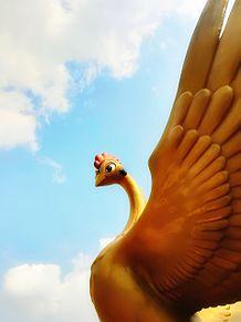 火の鳥。 プリ画像