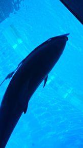 イルカの画像(楽しかったに関連した画像)
