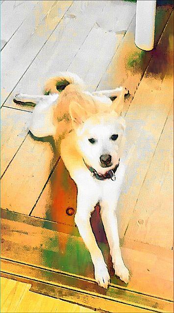愛犬日和の画像(プリ画像)