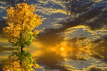 半透明 秋 風景 自然 夕焼け 黄葉樹 素材 背景の画像(半透明に関連した画像)