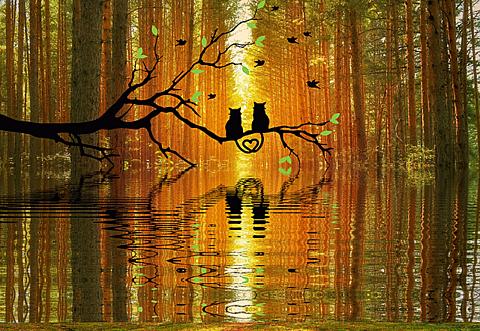 半透明 秋 秋色 猫 黒猫 森 シルエット 素材 背景の画像 プリ画像