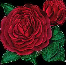 薔薇 背景の画像1255点 ページ目 完全無料画像検索のプリ画像 Bygmo