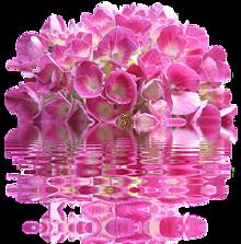 半透明 背景透過  紫陽花💠 アジサイ💠の画像(半透明に関連した画像)