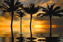 半透明  ヤシの木🌴  海  夕陽 夕焼け  風景の画像(南国に関連した画像)