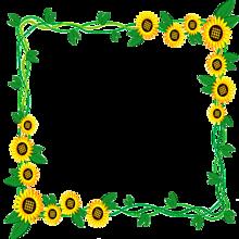 背景透過  フレーム  向日葵🌻の画像(フレーム 枠に関連した画像)