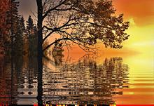 半透明  秋  風景  自然  幻想的の画像(自然に関連した画像)