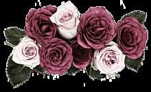 背景透過  薔薇  バラ  ローズの画像(大人ガーリーに関連した画像)