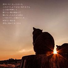 作曲 猫 作詞