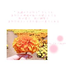 Mr.Children 花の匂いの画像(Mr.Childrenに関連した画像)