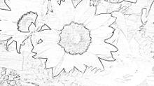 向日葵 プリ画像