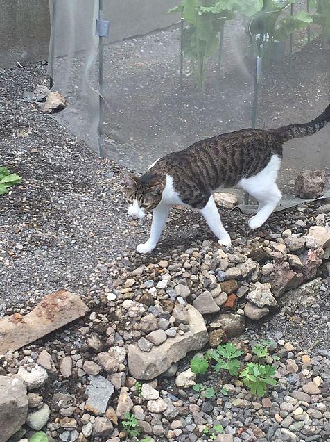 猫ちゃんの画像(プリ画像)