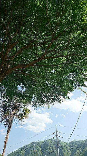 木と空の画像(プリ画像)