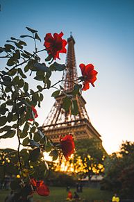 エッフェル塔と赤い花の画像(キレイに関連した画像)
