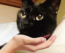 黒猫ぷうちゃんの画像(プリ画像)