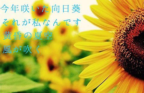 太陽と向日葵の画像(プリ画像)