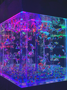 アクアリウムの画像(アクアリウムに関連した画像)