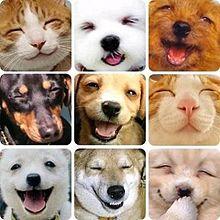 笑う猫の画像集 [1] | 完全無料...