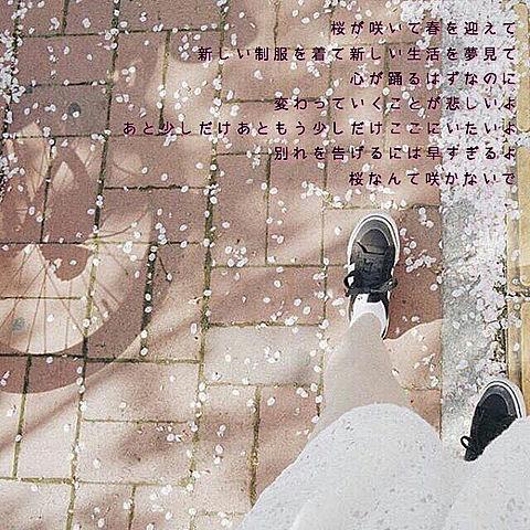 桜なんて咲かないでの画像(プリ画像)