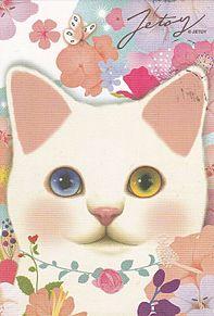 白猫*ジェトイ  (マイコレはポチ押す)の画像(プリ画像)