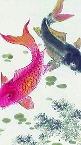 和風*真鯉と緋鯉  (マイコレはポチ押す)の画像(プリ画像)