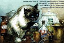 猫の化学者  (マイコレはポチ押す)の画像(プリ画像)