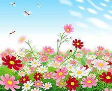秋桜畑に赤トンボ  (マイコレはポチ押す)の画像(プリ画像)