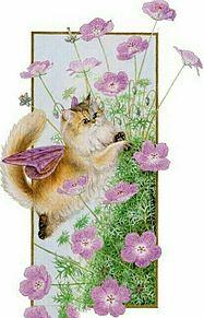 秋桜と猫  (マイコレはポチ押す)の画像(プリ画像)