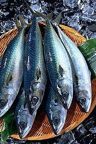 秋鯖 (アキサバ)  (マイコレはポチ押す)の画像(プリ画像)