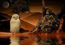 フクロウの世界  (マイコレはポチ押す)の画像(プリ画像)
