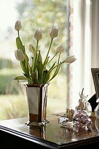 花瓶に飾ったチューリップ  (マイコレはポチ押す) プリ画像
